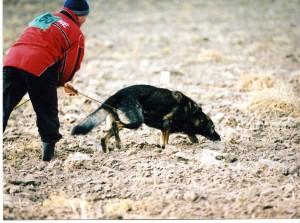 Собака должна держать нос над землей во время всего прохождения пути