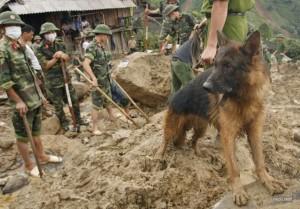 Немецкая овчарка помогает искать людей после оползня. Вьетнам.